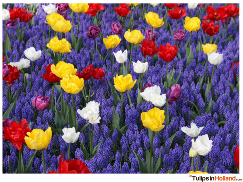 Motorcycle expedition to Holland for the tulips – Suzette Datema