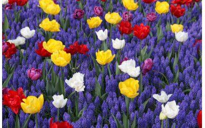 Motorfietsekspedisie na Holland vir die tulpe – Suzette Datema