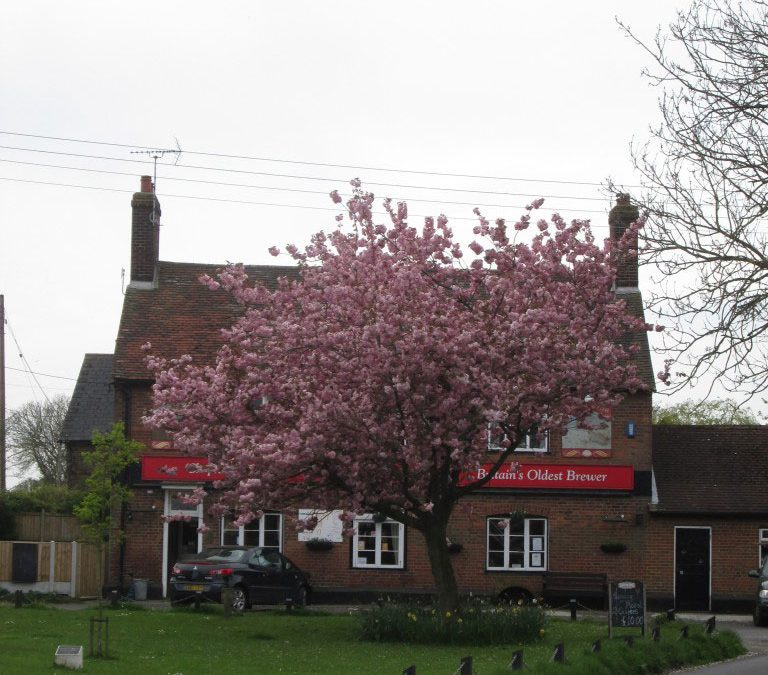 'Lamb on the spit' braai in Kent