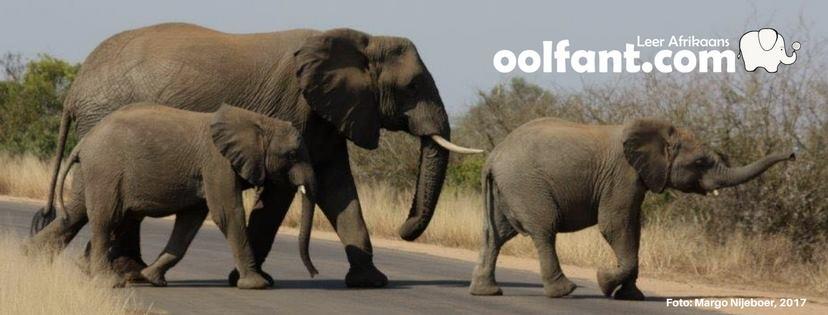Besigheid in die Kollig: Oolfant.com