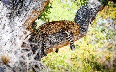 Kry die beste uit die Krugerwildtuin
