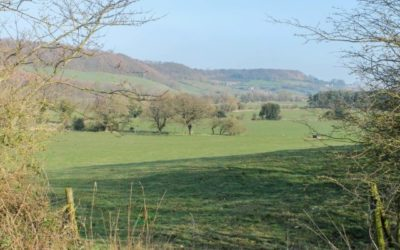 Stap deur Yorkshire se Raincliffe Woods