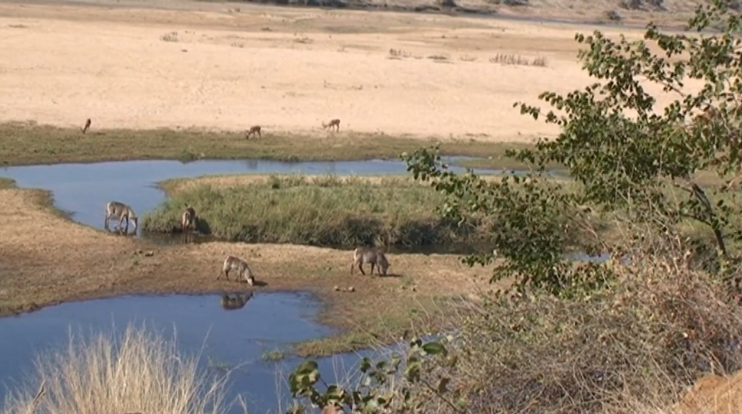 Nature's Corner – Relax a while with waterbuck
