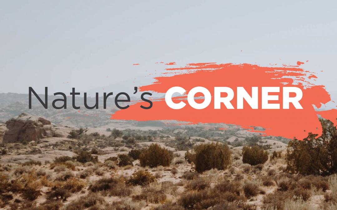 Nature's Corner – Monkey Business