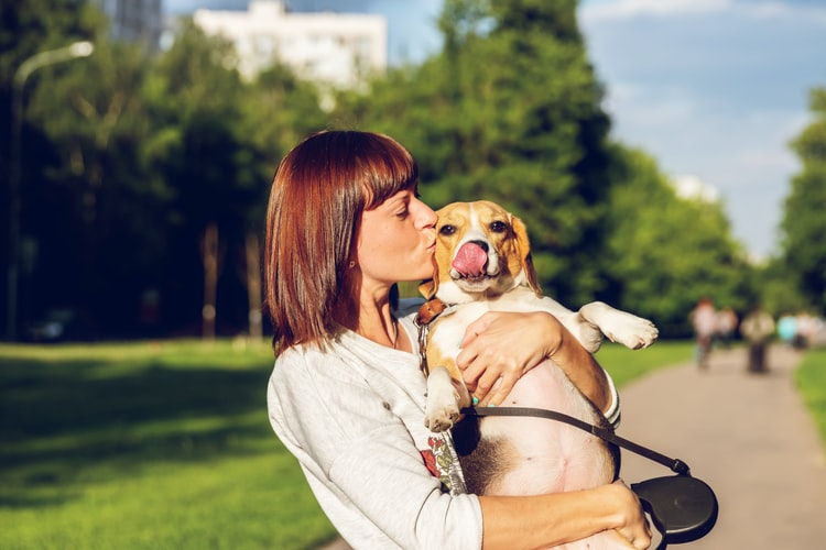 Crossing international borders with pets: What you need to know